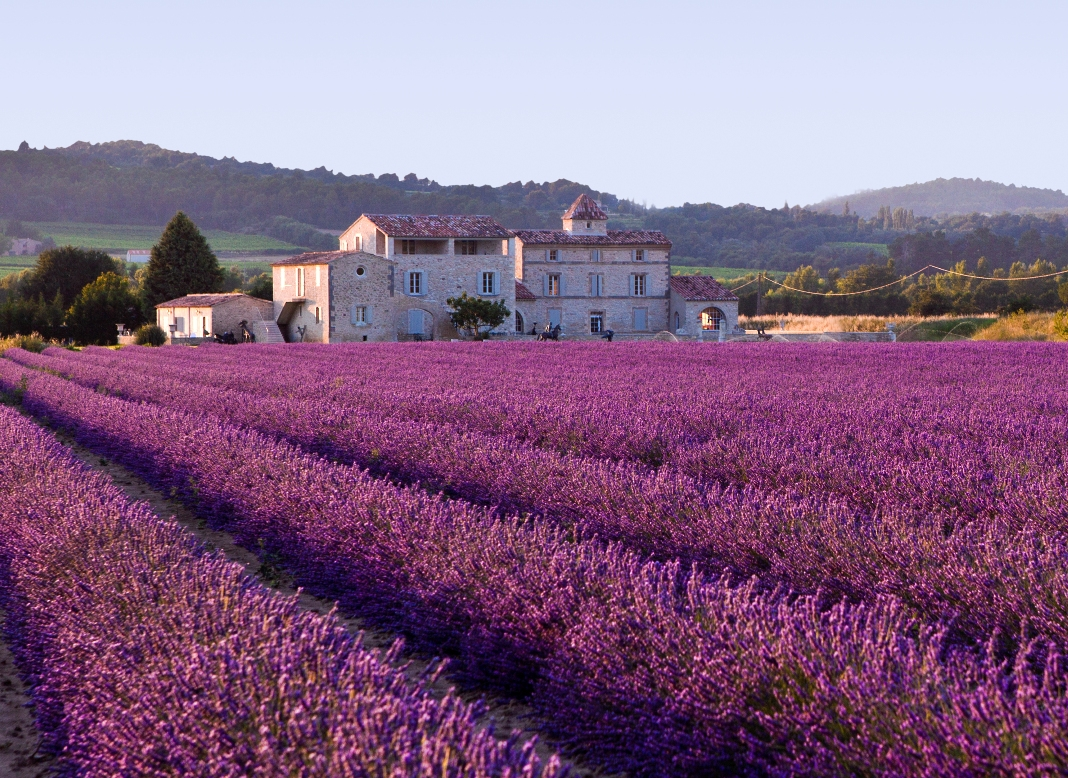Lavender_field provence