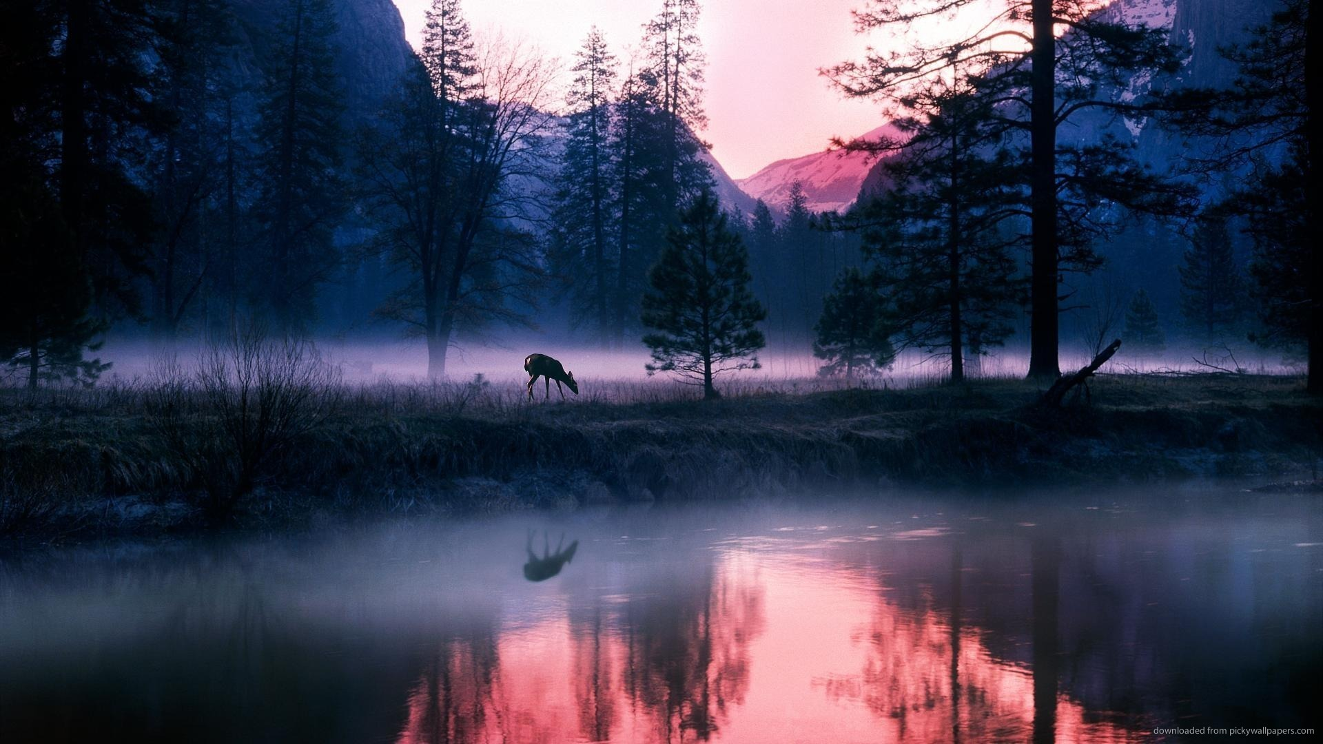 night-in-yosemite-national-park