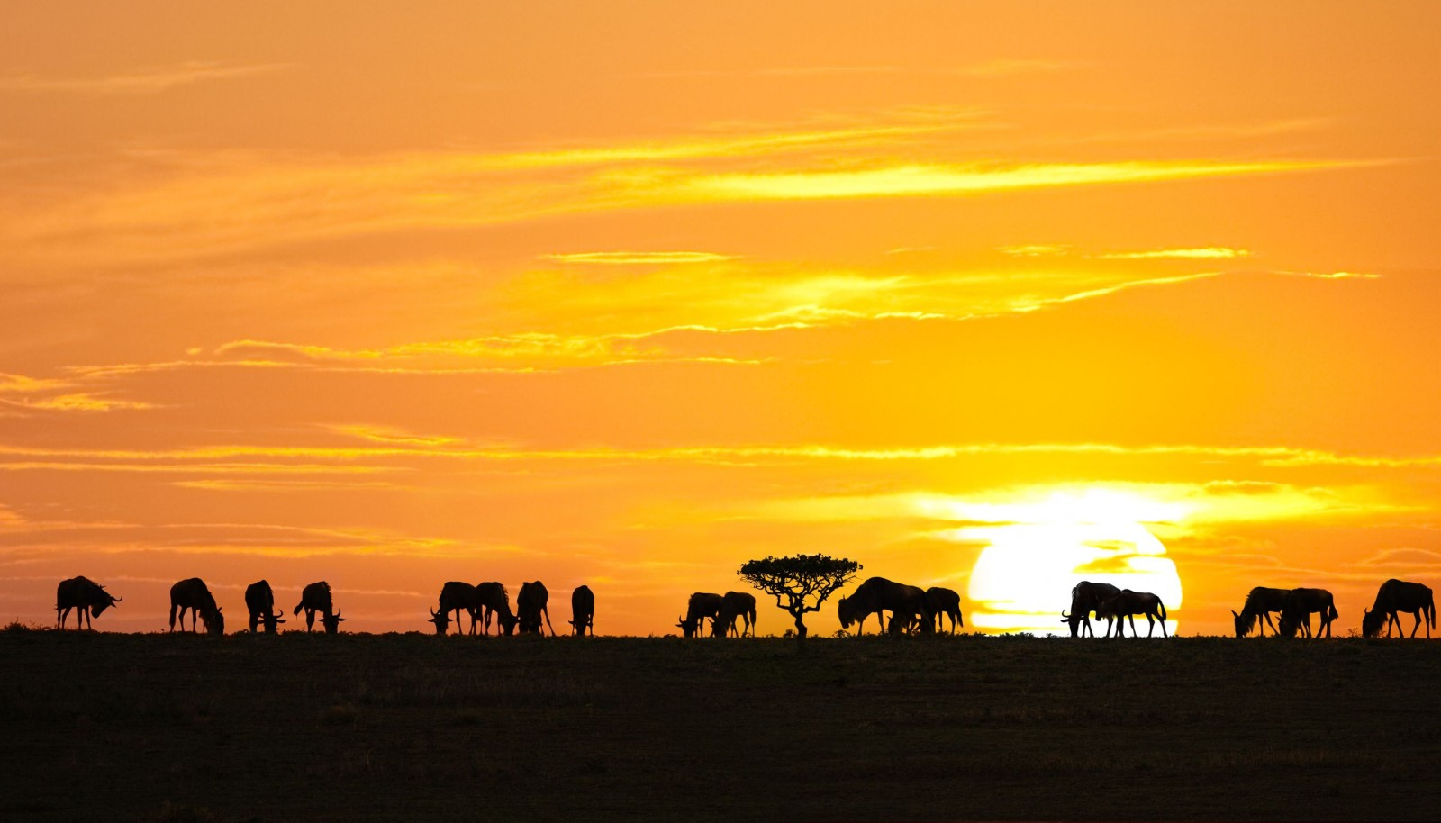 http://www.getintravel.com/adventure-travel-to-serengeti-national-park-tanzania/